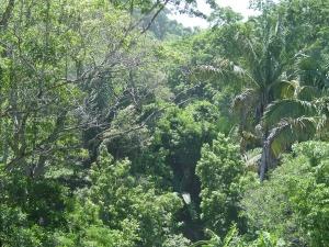 Montezuma, Provincia de Puntarenas, Costa Rica