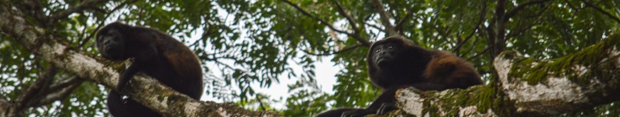 Refugio Nacional de Vida Silvestre Romelia